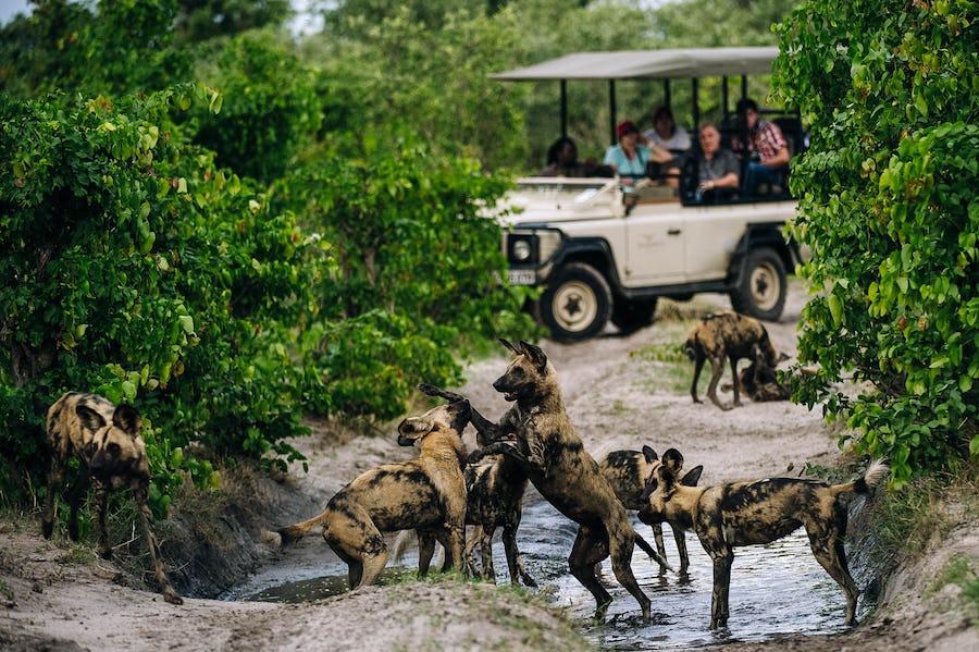 big five safari south africa