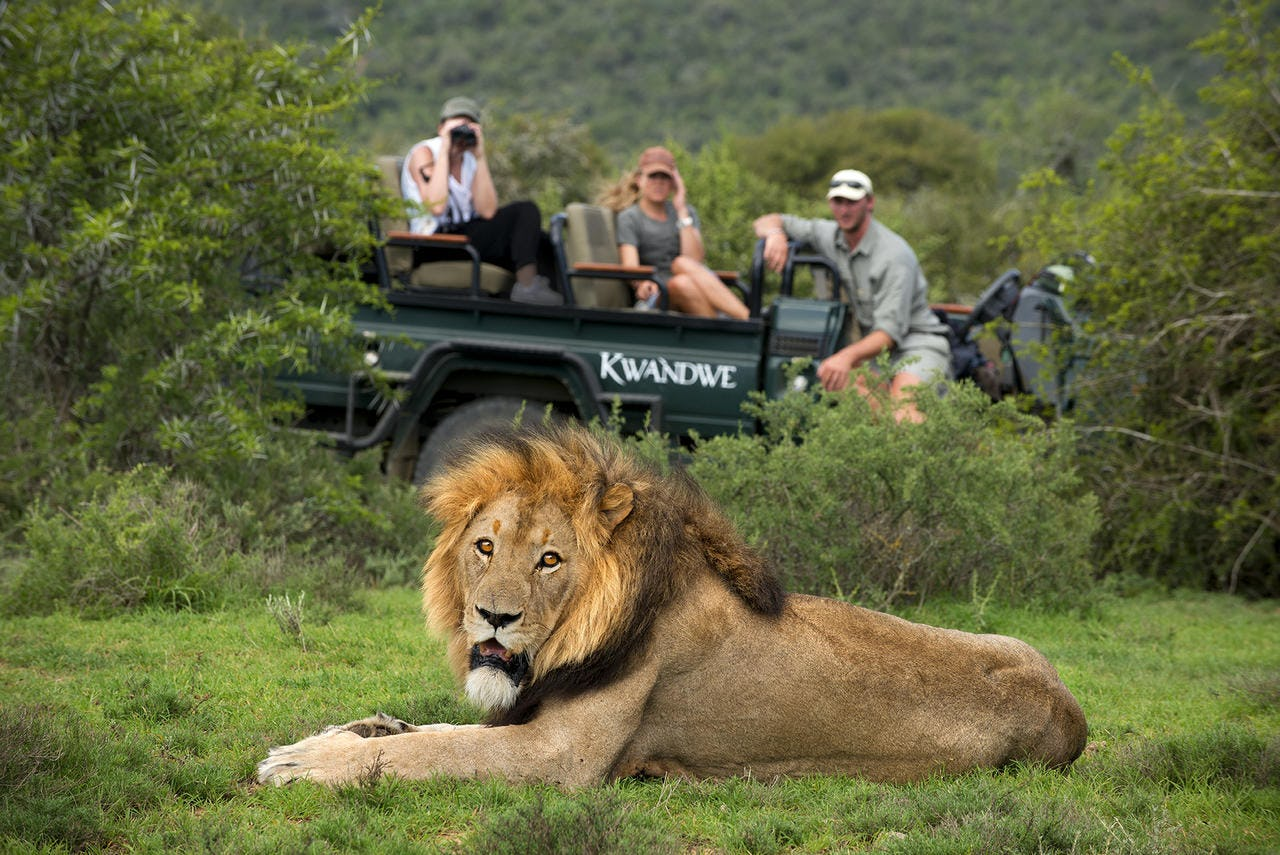 Safari. The best way to see the sites
