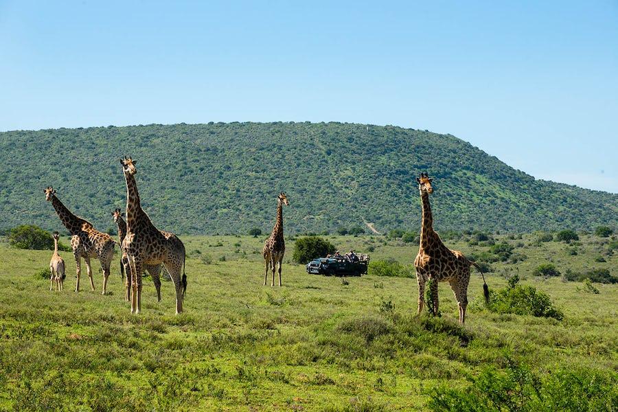 eastern cape safari big 5 safari