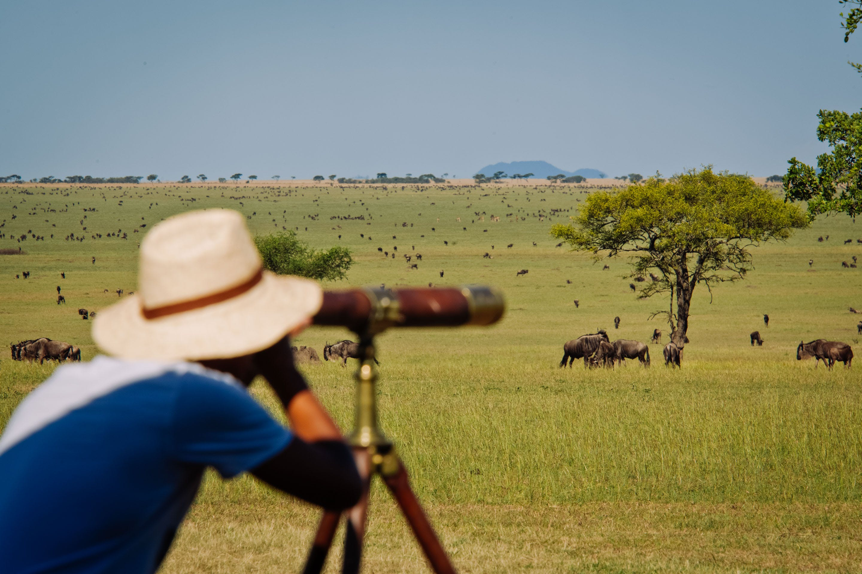 Serengeti wildebeest Tanzania