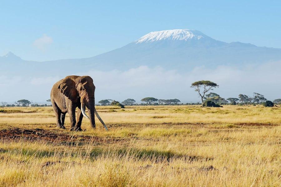 kilimanjaro best time to visit tanzania