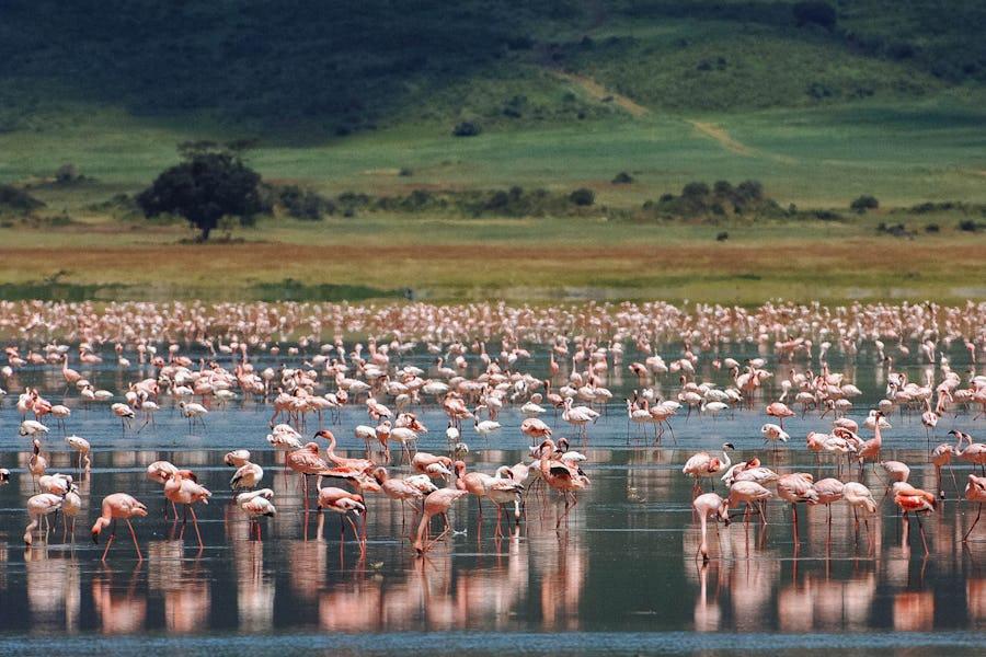 ngorongoro best time to visit tanzania