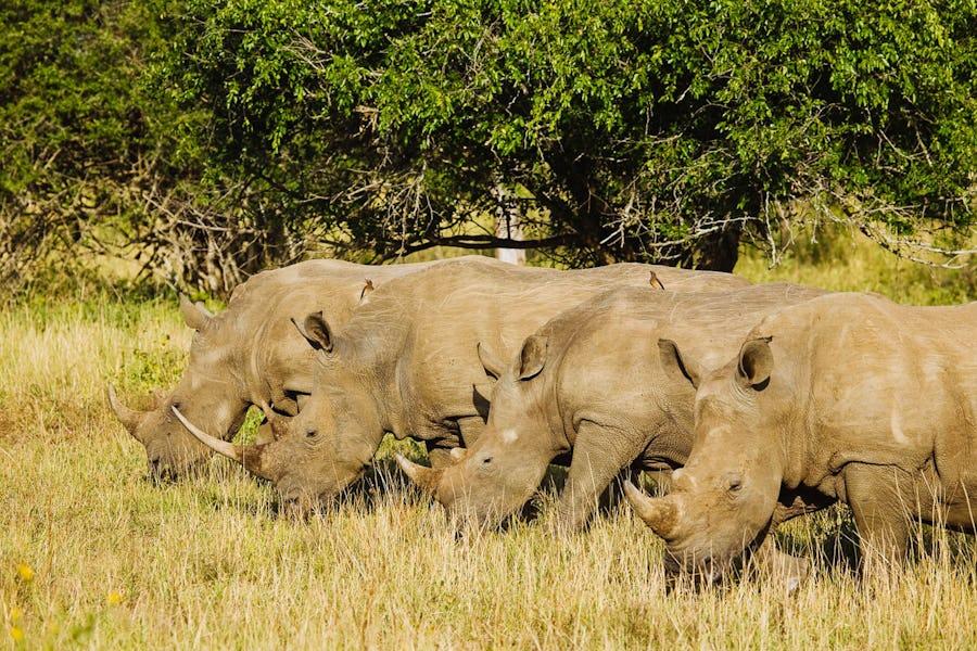RRSL-rhinos-reduced walking safaris