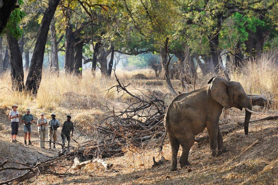 chikoko-trail-luangwa-walking-safari