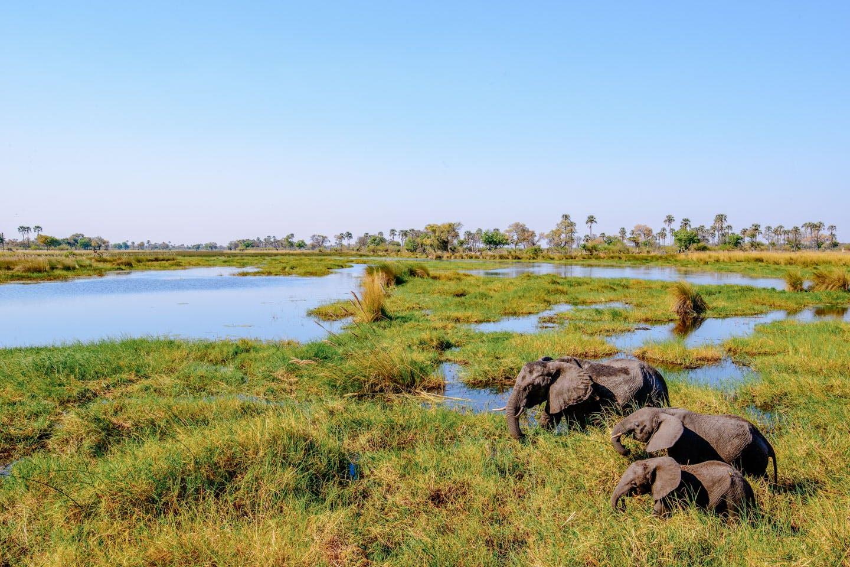 oddballs-enclave-chiefs-island-okavango-delta-botswana-walking-safari