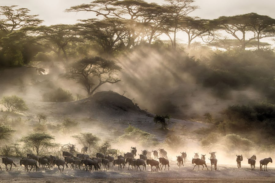 best time to see great migration