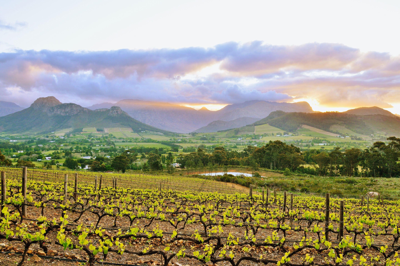 Cape Winelands la petite ferme