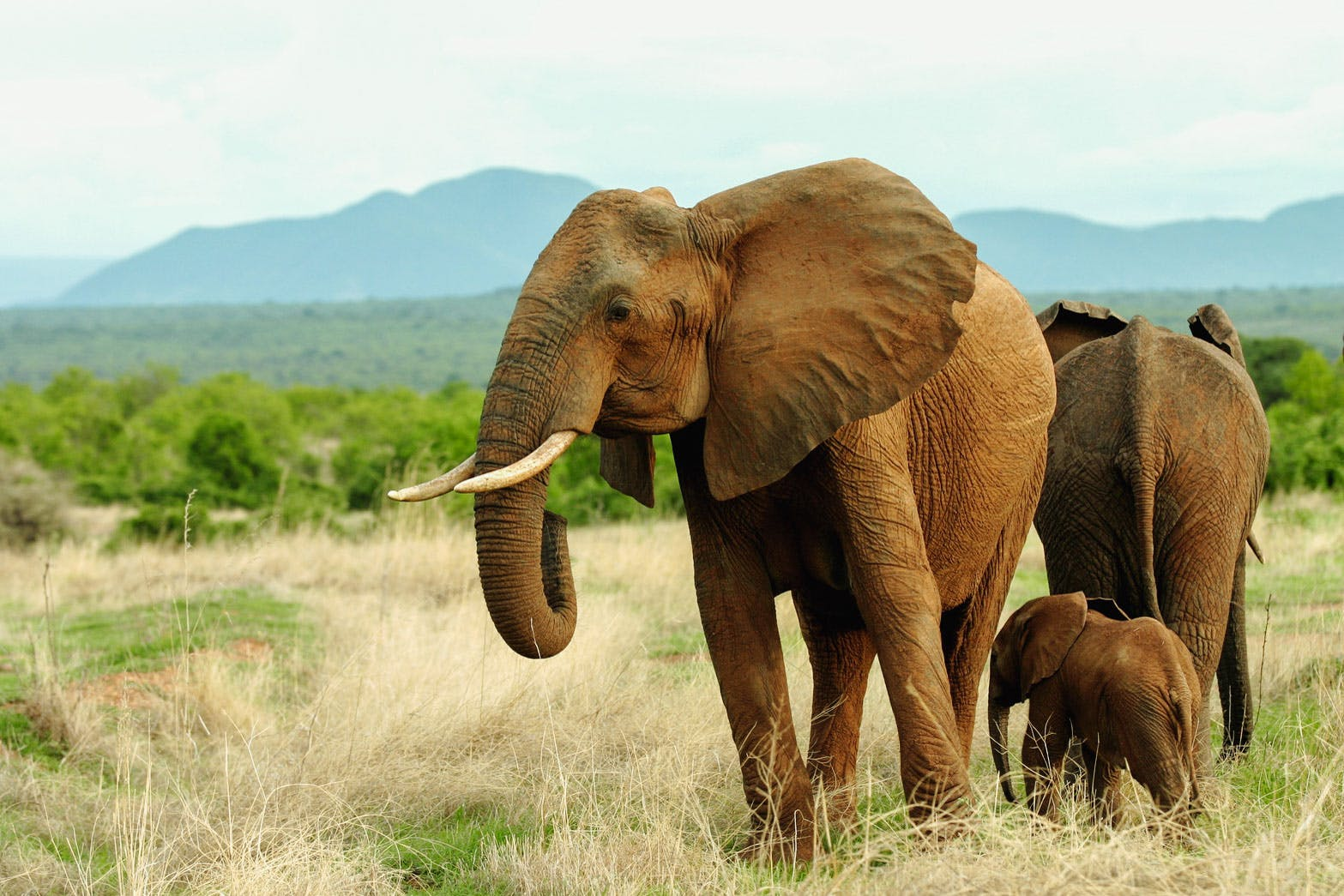 elephants-ruaha-tanzania-timbuktu-travel