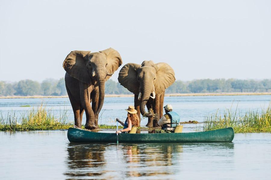 active safari