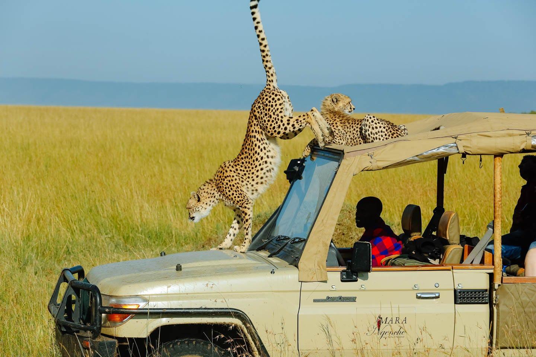 safari tented camps in masai mara Welcome to an african adventure deep in the masai mara.