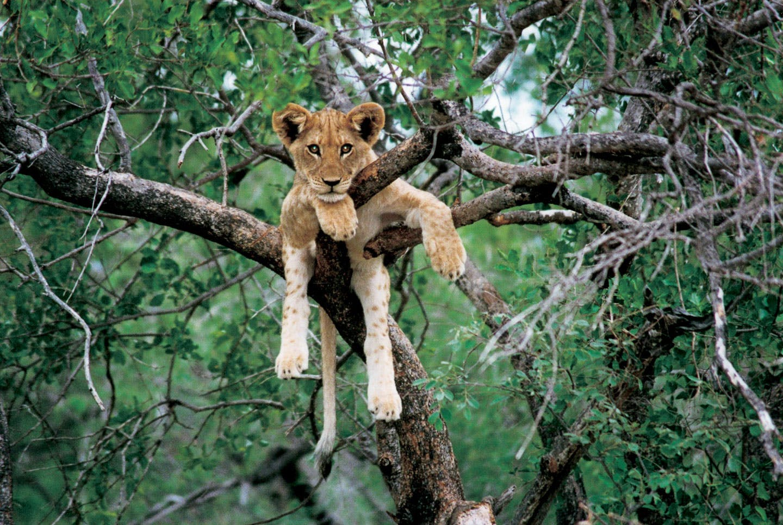 zambia travel guide big 5 safari
