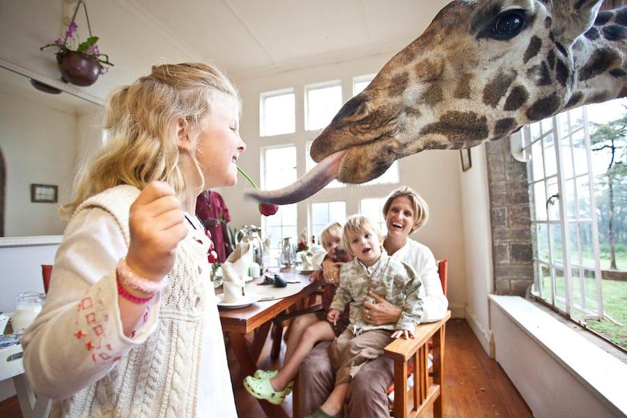 giraffe manor lodges where animals roam free