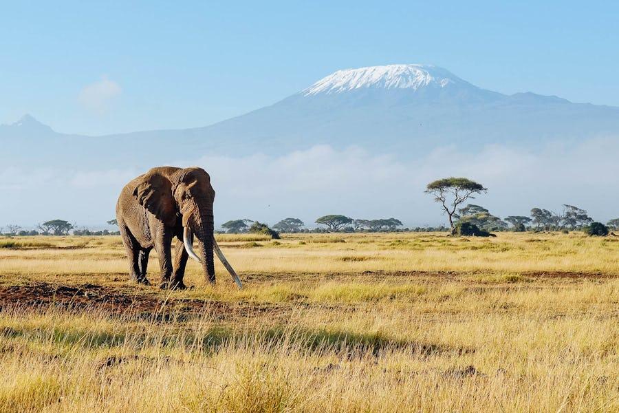 Kilimangaro safari top 10 african adventures