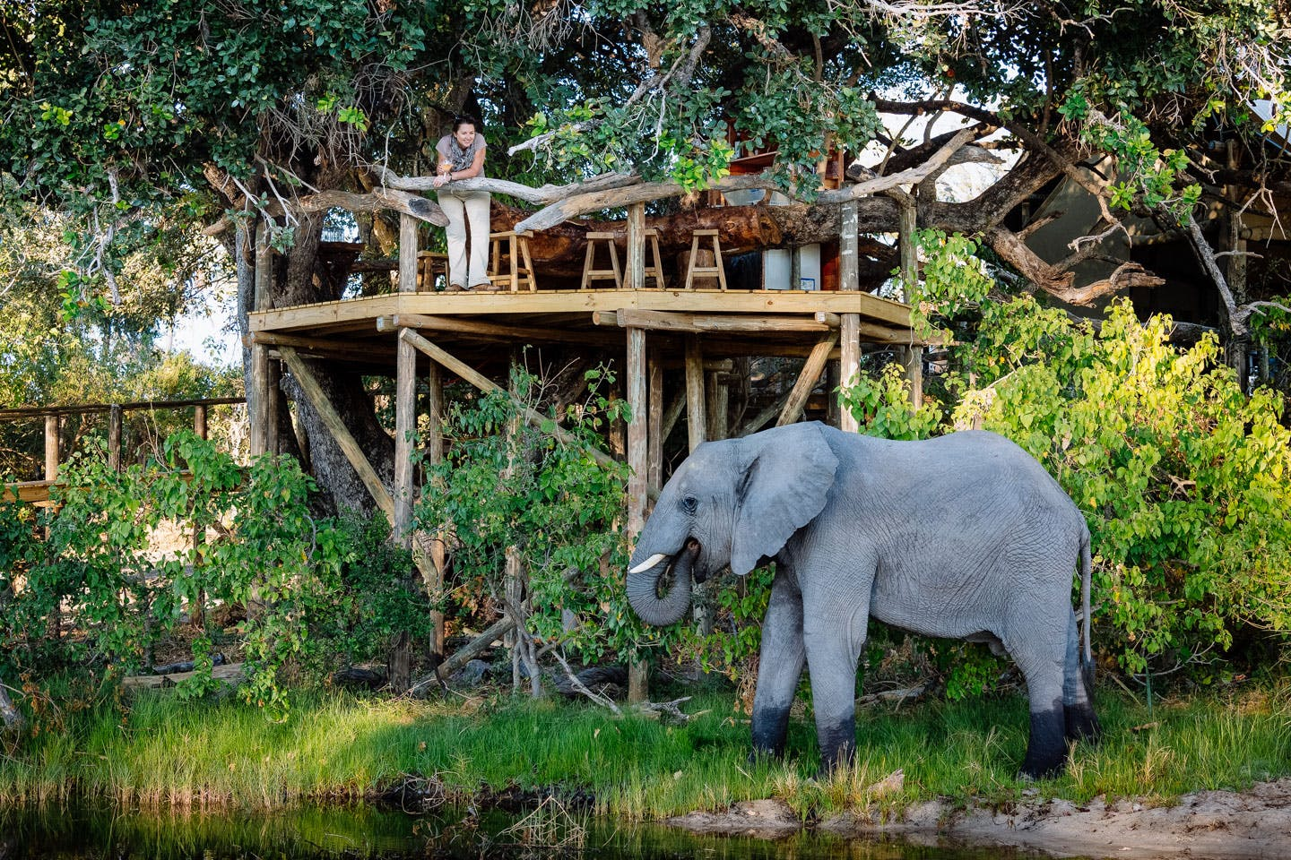 little tubu lodges where animals roam free