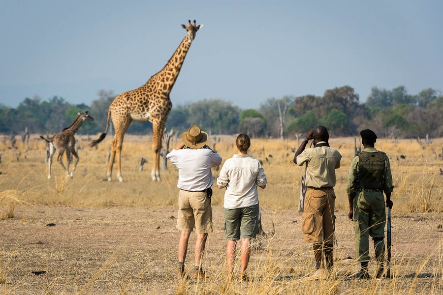 Walking safari south luangwa top 10 african adventures