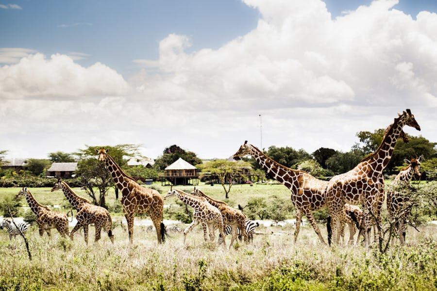 segera top lodges where animals roam free