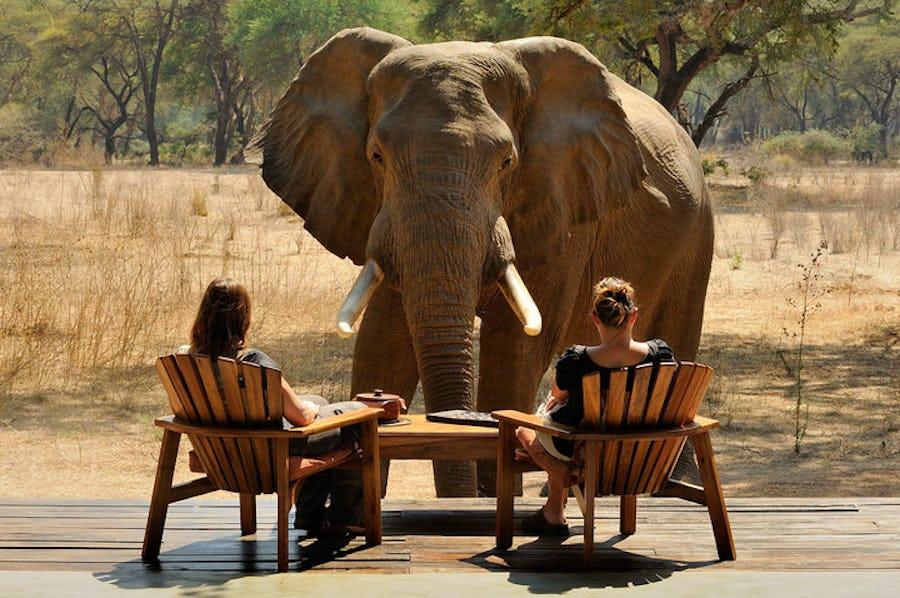 zambia chiawa top lodges where animals roam free