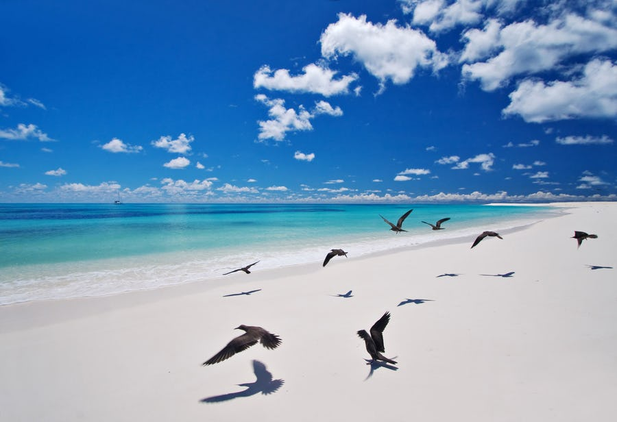 west beach bird island mauritius