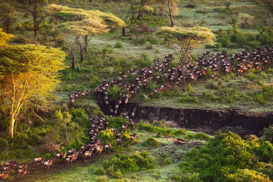 tanzania serengeti where to go december africa african christmas safari