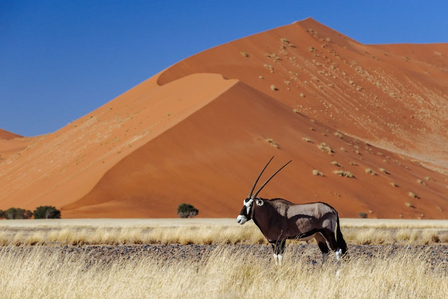 Oryx dune wilderness Namibia travel tips