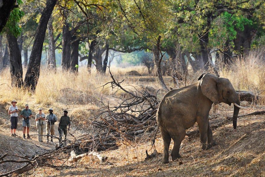 Chikoko trails walking safari best of 2017
