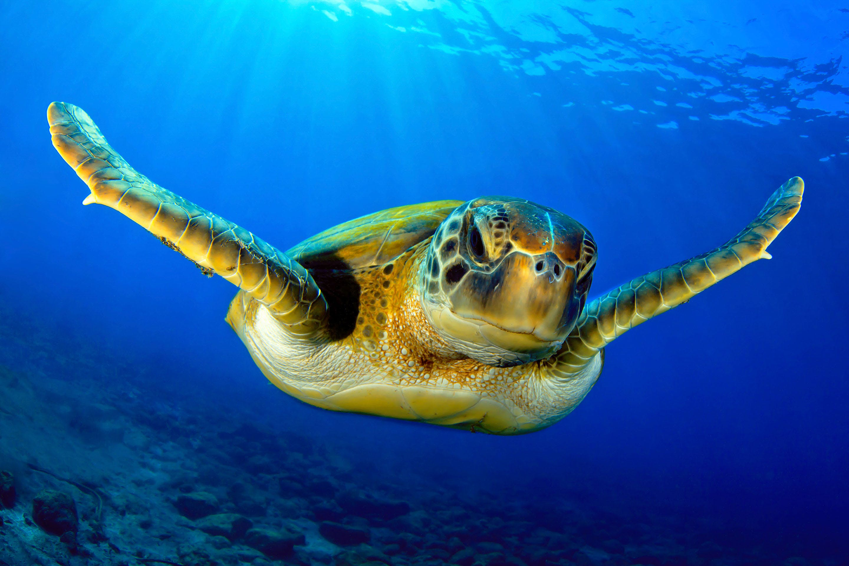 Green turtle oceans mozambique top diving spots in africa