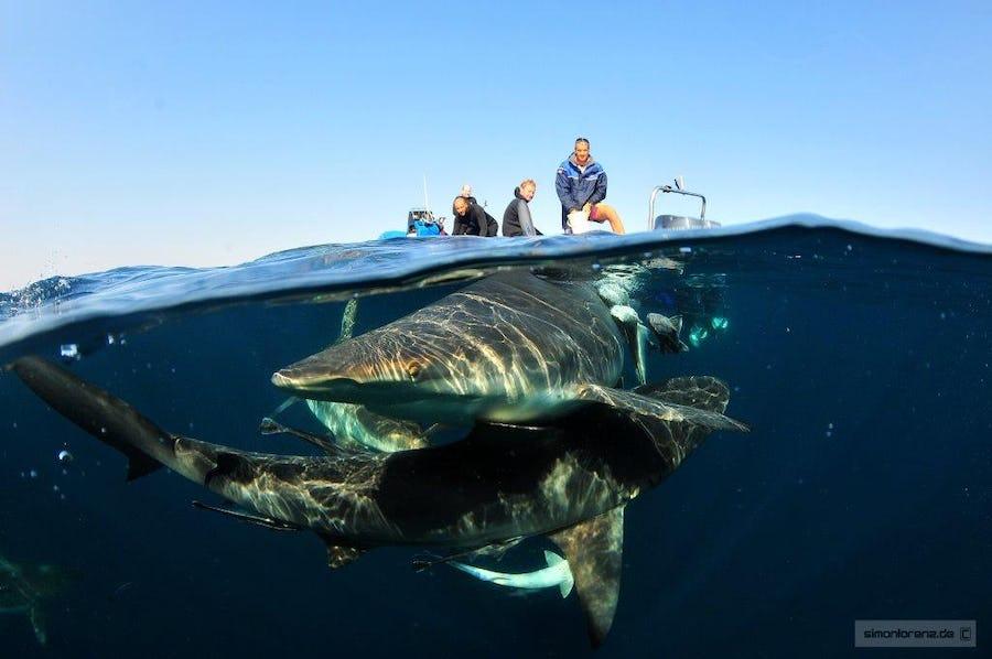 Aliwal Kwazulu Natal South Africa top diving spots in africa