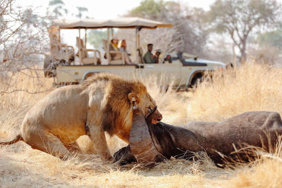 Tanzania ruaha ikuka safari Camp