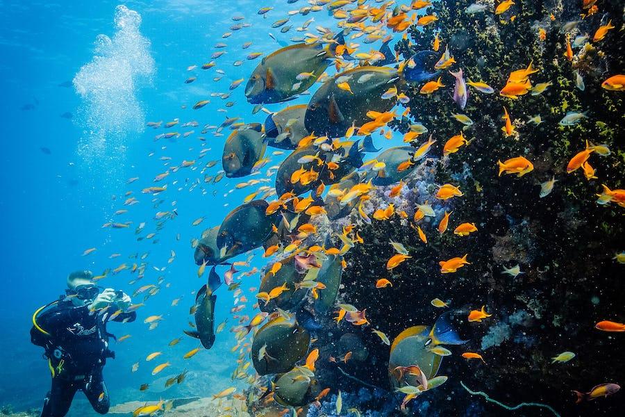 Azura Benguerra Mozambique top diving spots in africa