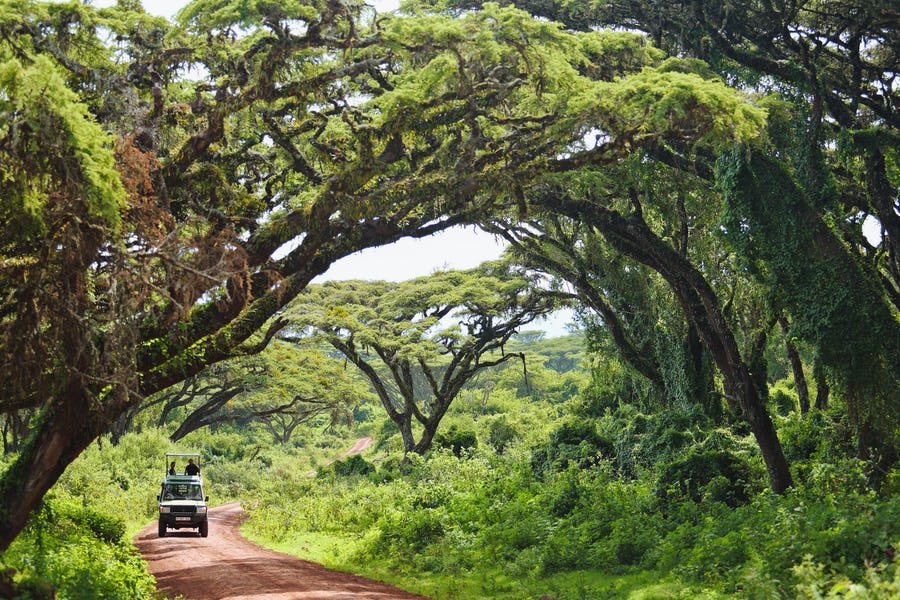 Ngorongoro the highlands camp