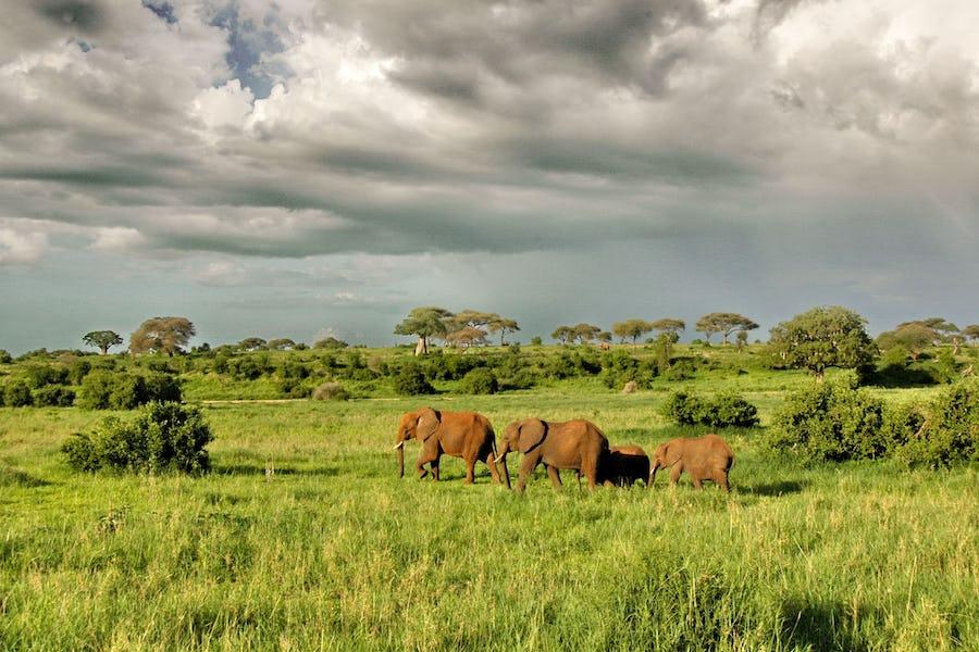 Tarangire olivers camp tanzania elephants