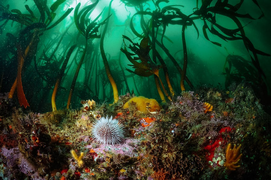 Cape Town scuba shack south africa top diving spots in africa