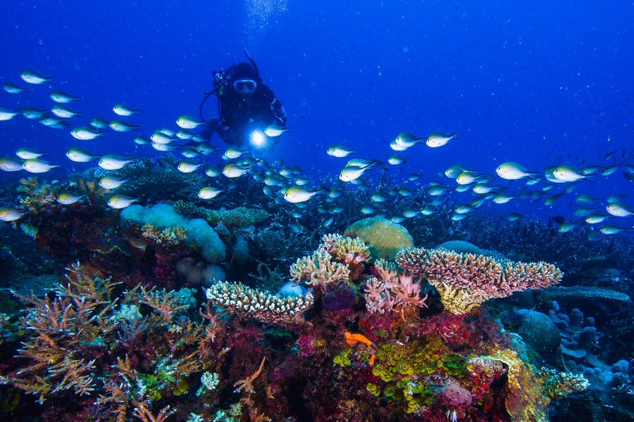 Anantara Medjumbe island mozambique top diving spots in africa