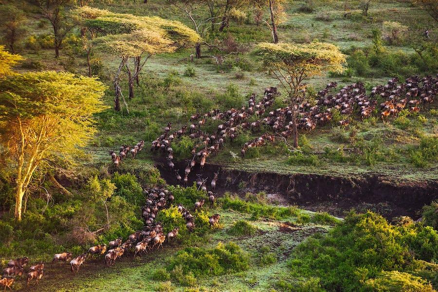 Great migration tanzania serengeti