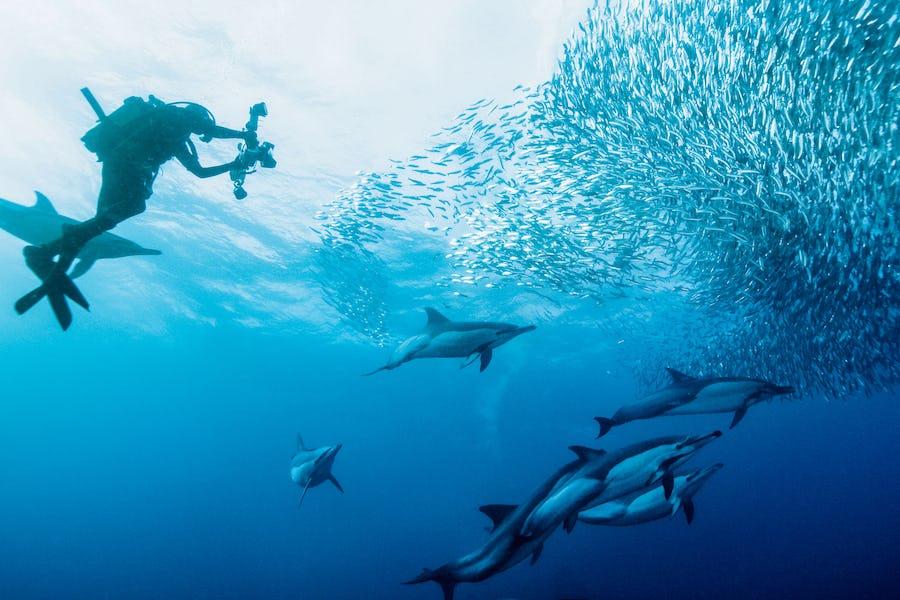 Sardine run kwazulu natal south africa top diving spots in africa