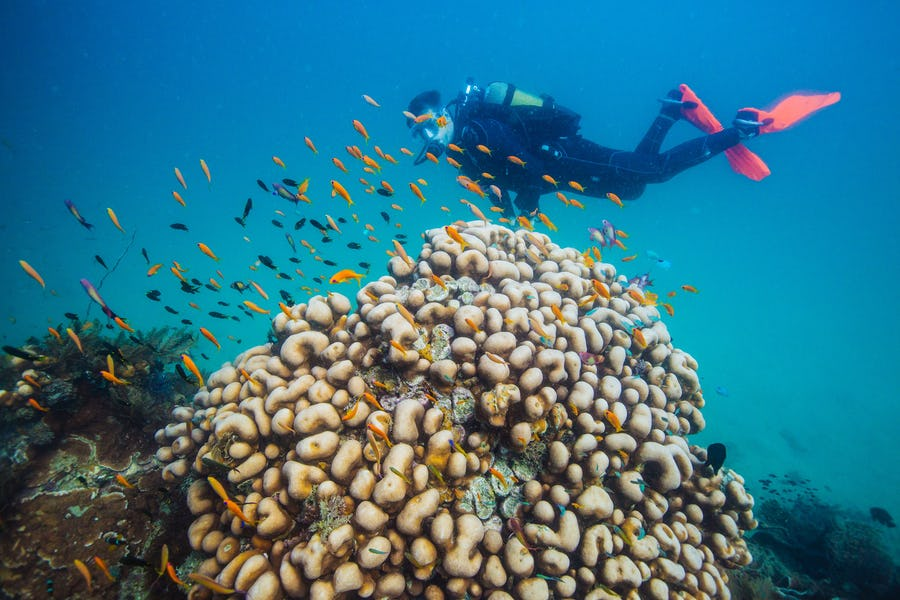 Azura Quilalea Mozambique top diving spots in africa