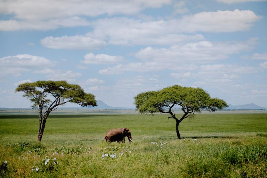 Green season, Elephant, Tanzania