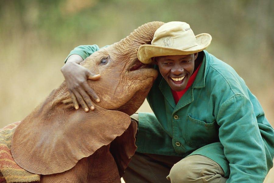 David Sheldrick Wildlife Trust Nairobi kenya stop over