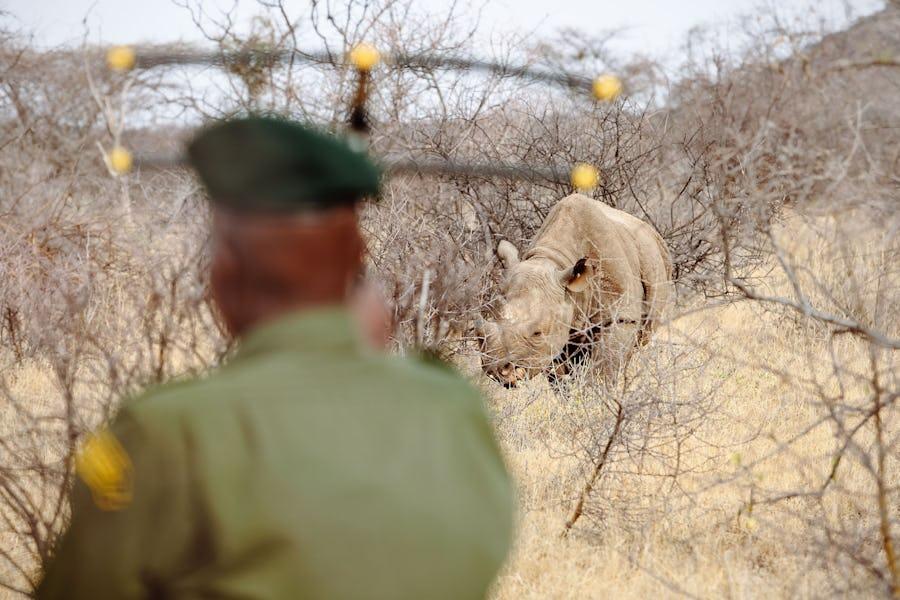 Saruni Rhino Camp, Samburu, Kenya