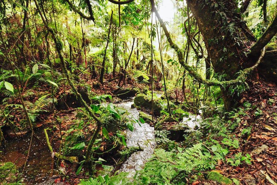 Sanctuary Gorilla Forest Camp, Africa; Uganda;