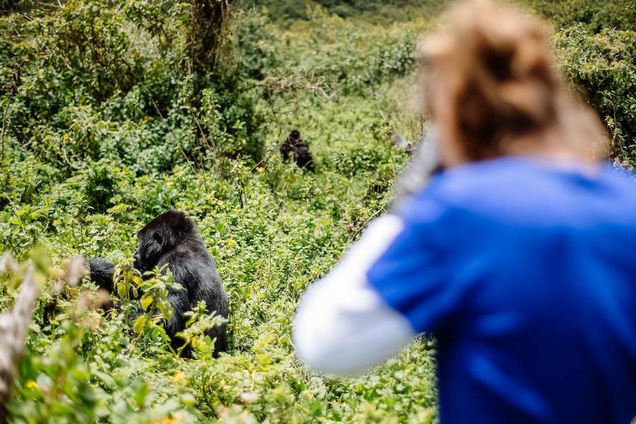 gorilla trekking, Africa