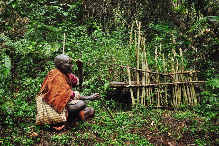 Gorilla tracker in the Bwindi forest, Uganda