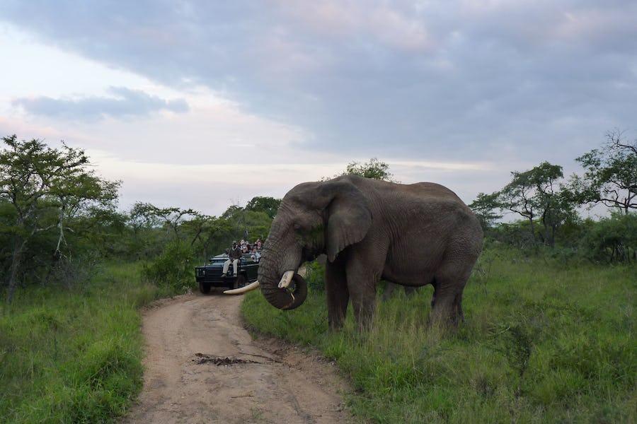 game drive, elephant, Kruger