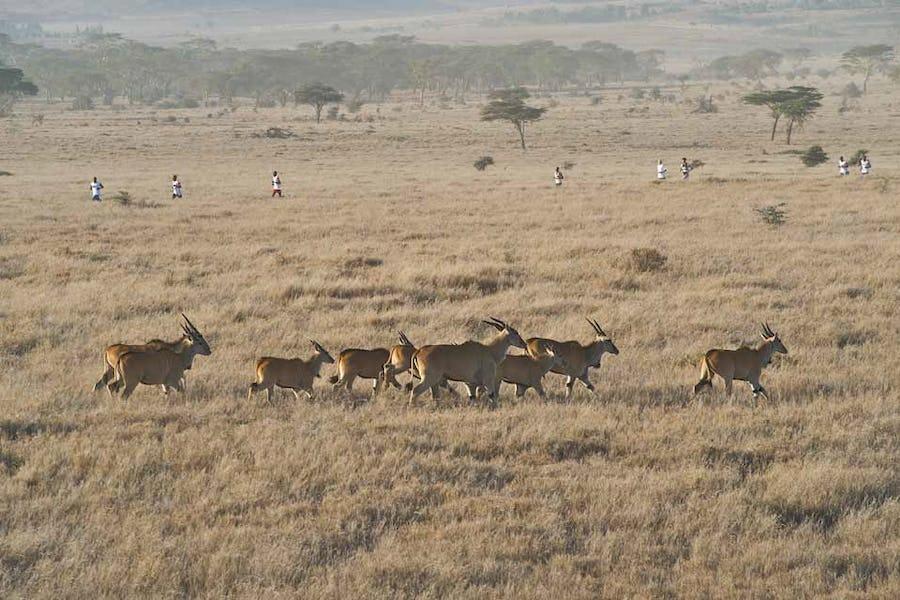 Safaricom Marathon, Lewa Downs, Kenya