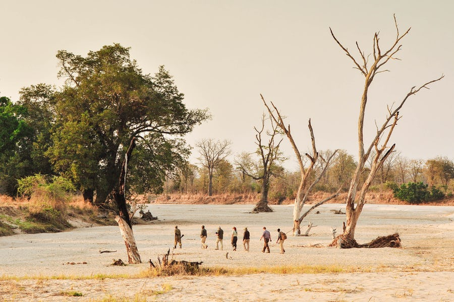 Norman Carr South Luangwa Zambia The Magic of a Walking Safari