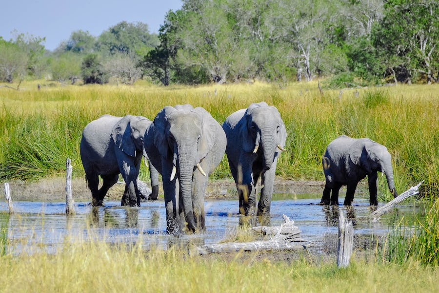 Elephants Okavango Top safari destinations to see the Big Five