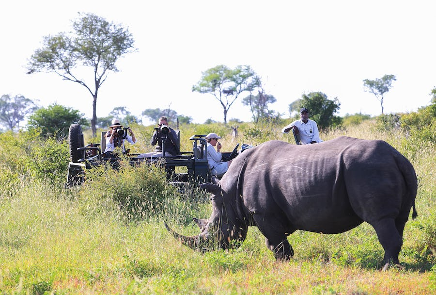 Rhino Kruger Top safari destinations to see the Big Five