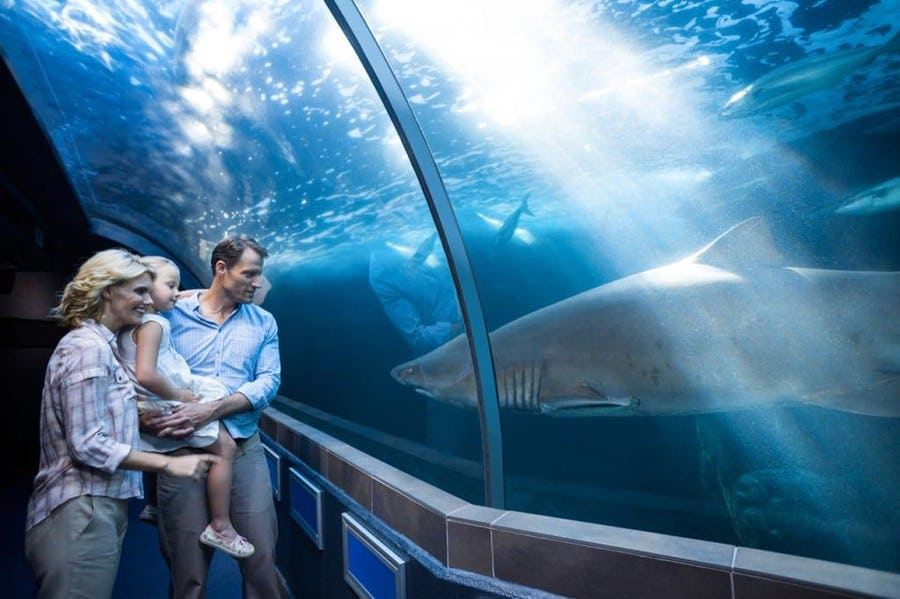 Two Oceans Aquarium - Family activities in Cape Town