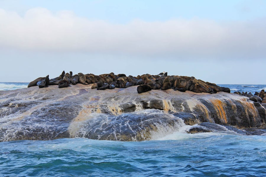 Seal Island - Family activities in Cape Town