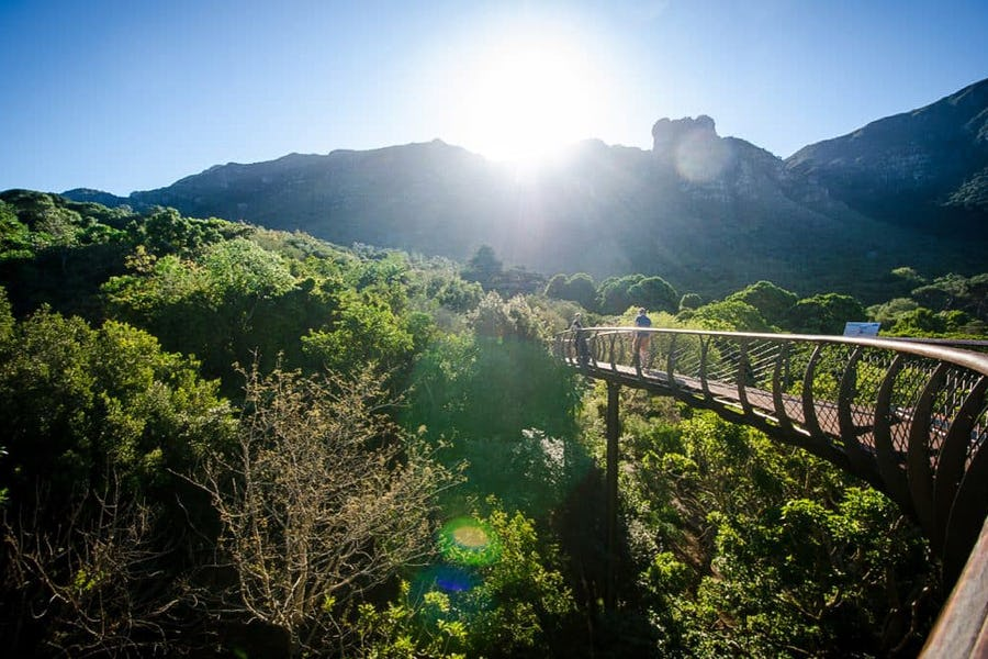 Kirstenbosch - Family activities in Cape Town